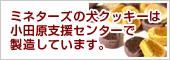 ミネターズの犬クッキーは小田原支援センターで製造しています。